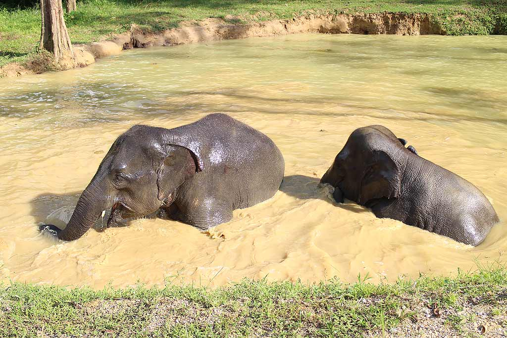 Elephants bathing, Elephant Hills Safari