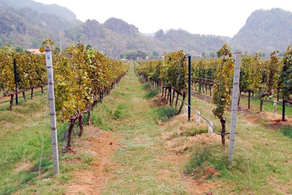 Granmonte Winery vineyards