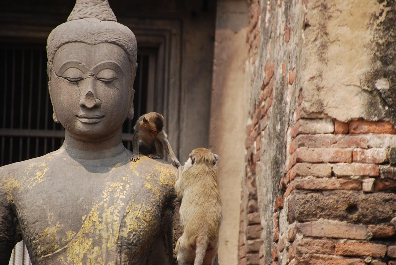 City Of Monkeys Lopburi