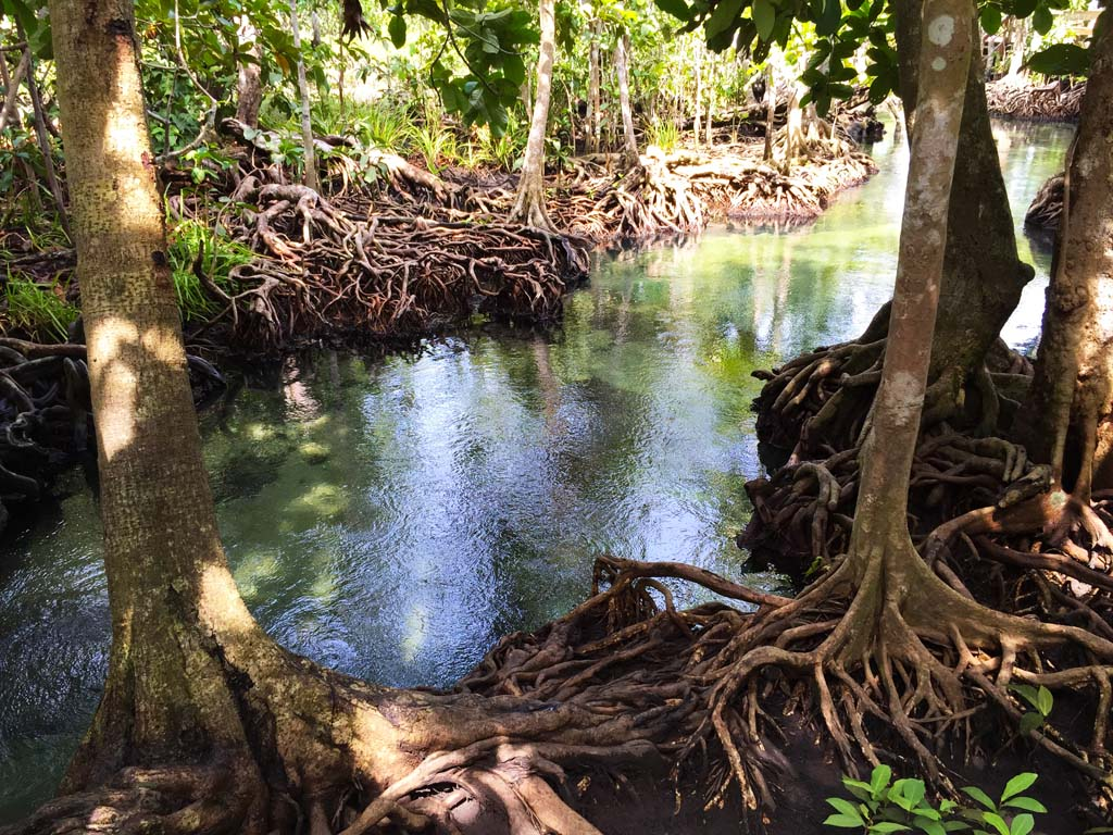 Krabi eco tours - Tha Pom Khlong Song Nam, a tidal mangrove forest