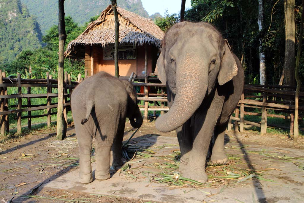 Mother and son, Elephant Hills, elephant safari thailand