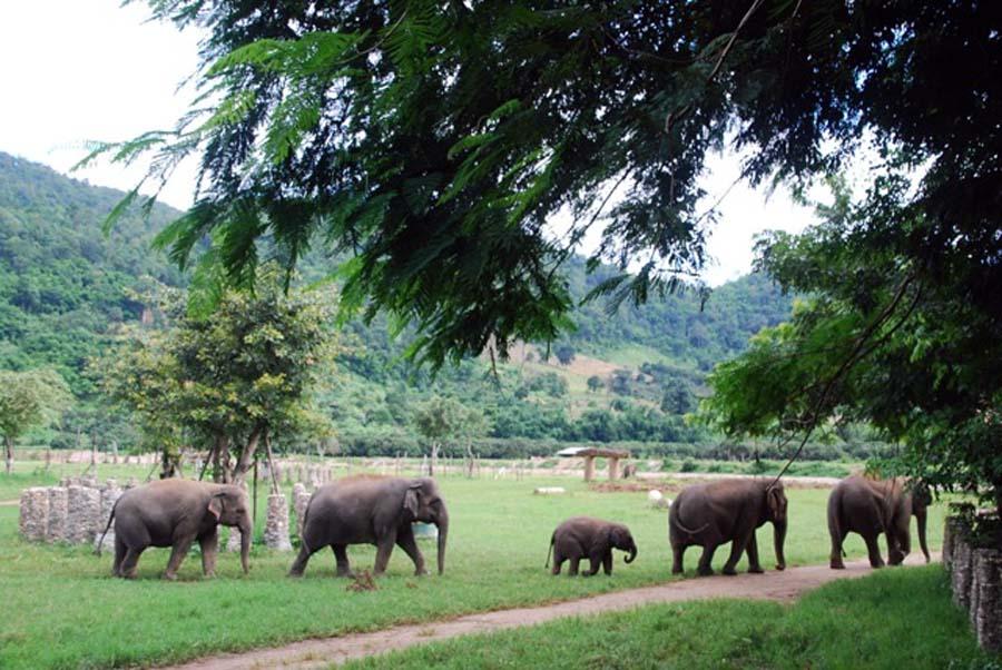 Elephant Nature Park, elephant safari thailand