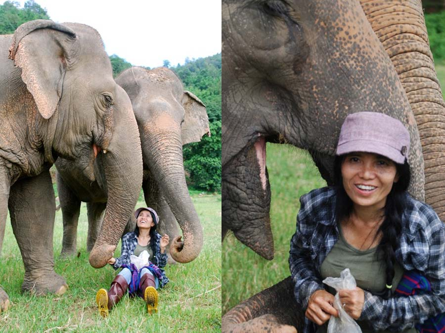 Elephant Nature Park's Lek Chailert, elephant safari thailand