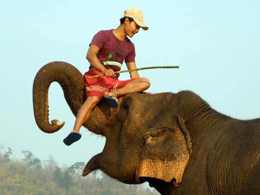Happy elephant and mahout, elephant safari thailand