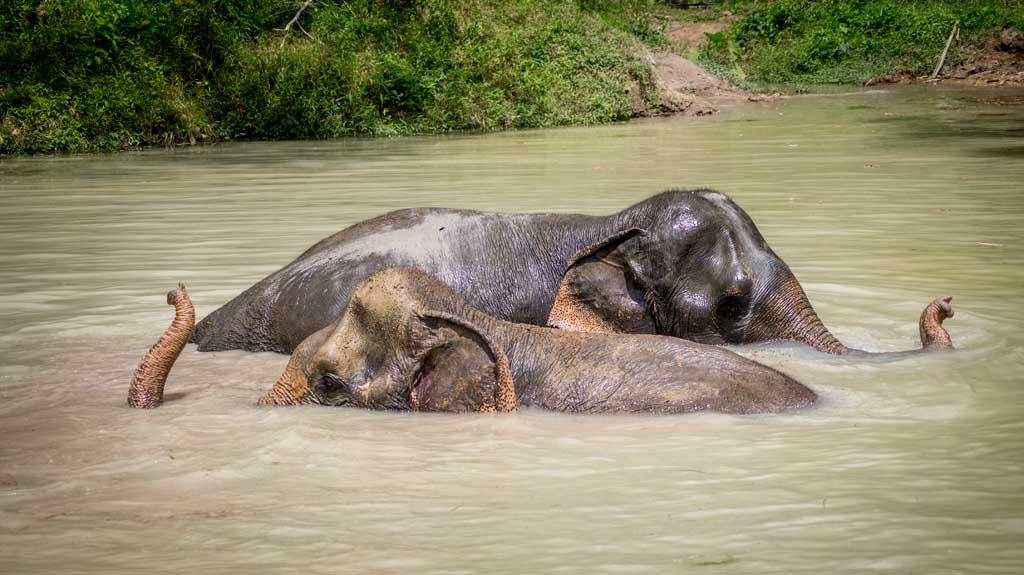 Phuket Elephant Sanctuary credit Raymond Gerritson