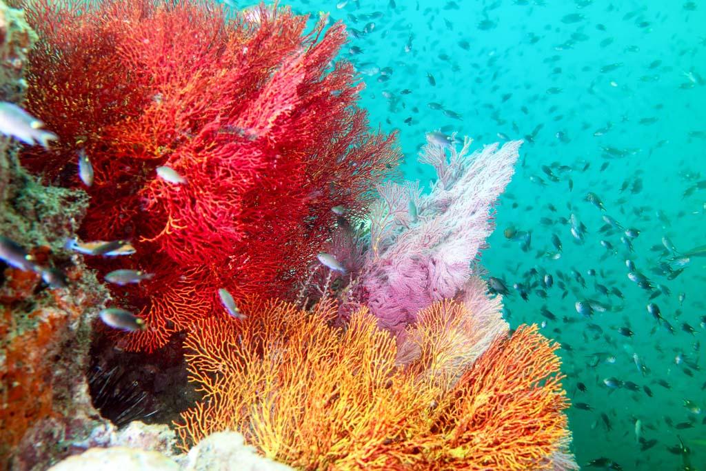Ko Kradang colourful coral_2015