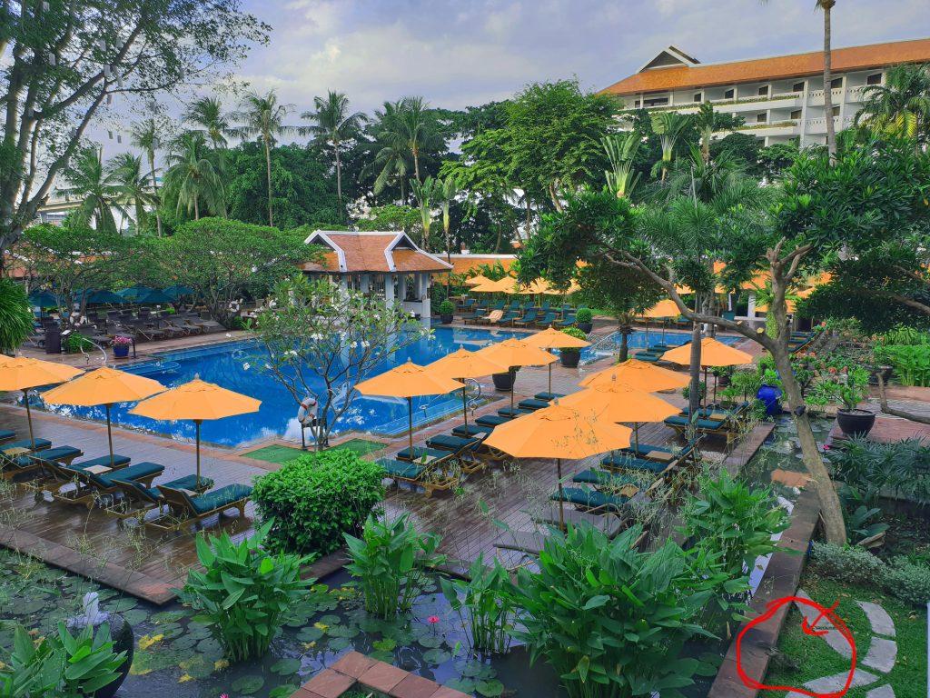 Anantara-Riverside-Hotel-pool-and-lizard