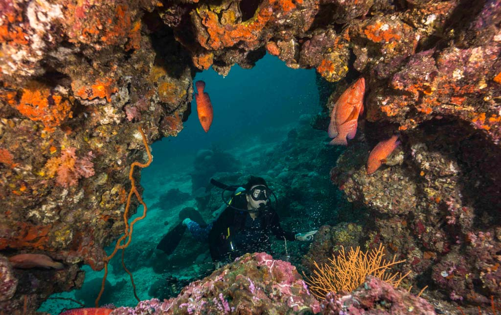 Koh Ha diver and swim through with coral trout credit Pete McGee