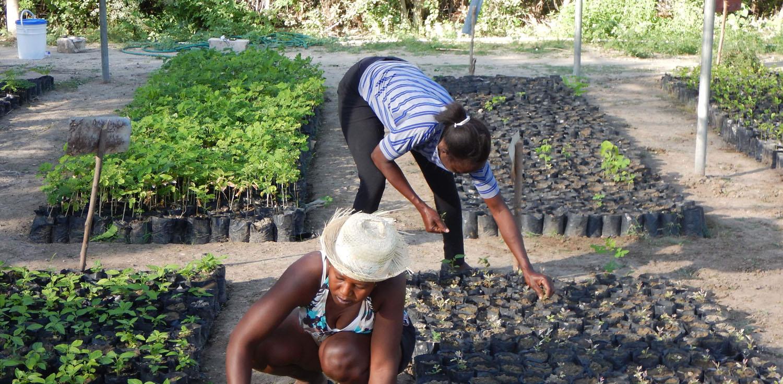 B'n'Tree Planting Seeds Madagascar