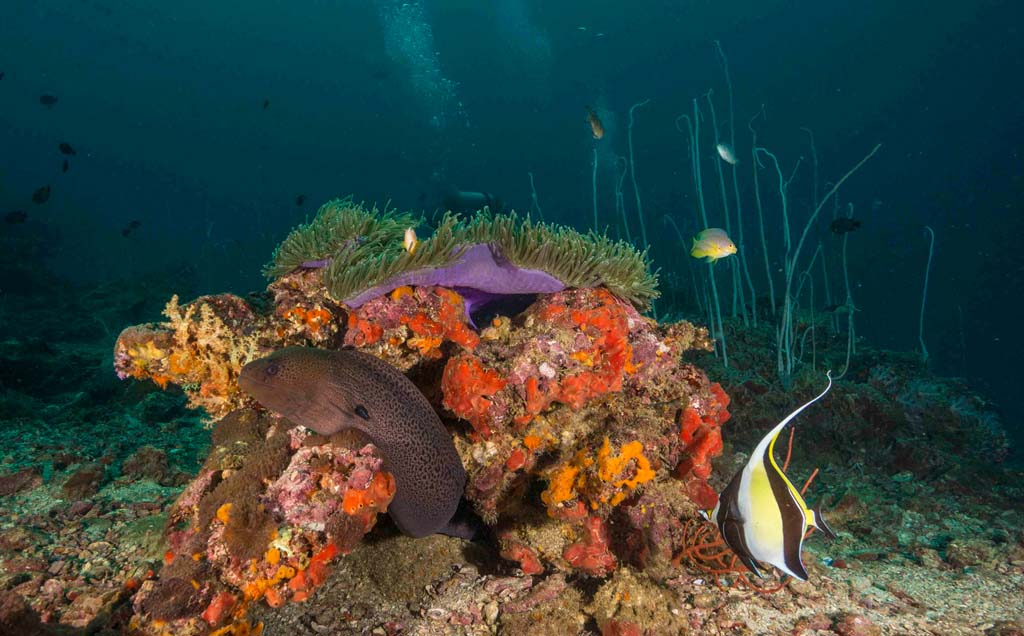 Dive Thailand moray eel and anemone_12_18