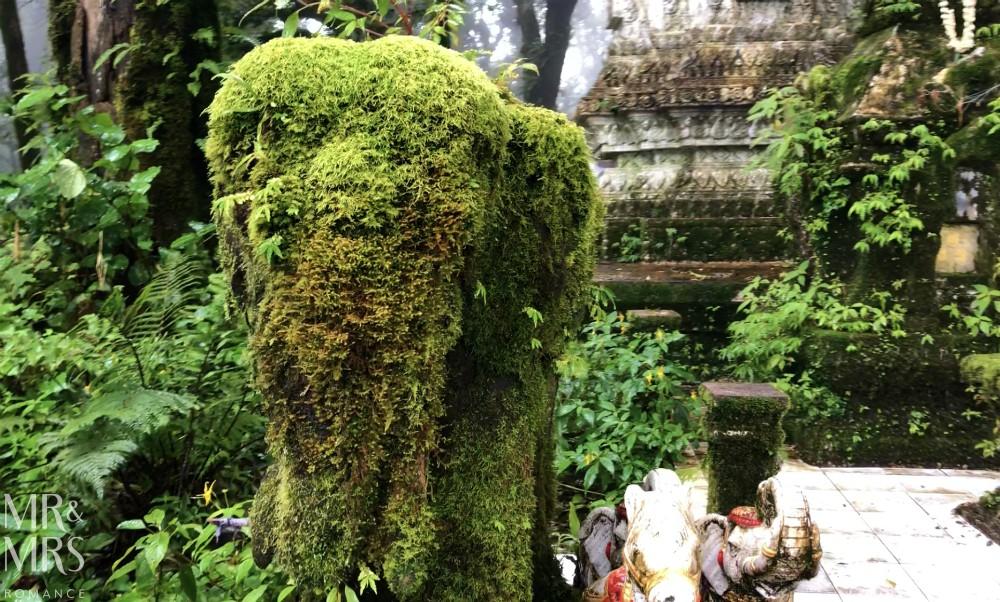 Visit-Chiang-Mai-elephant