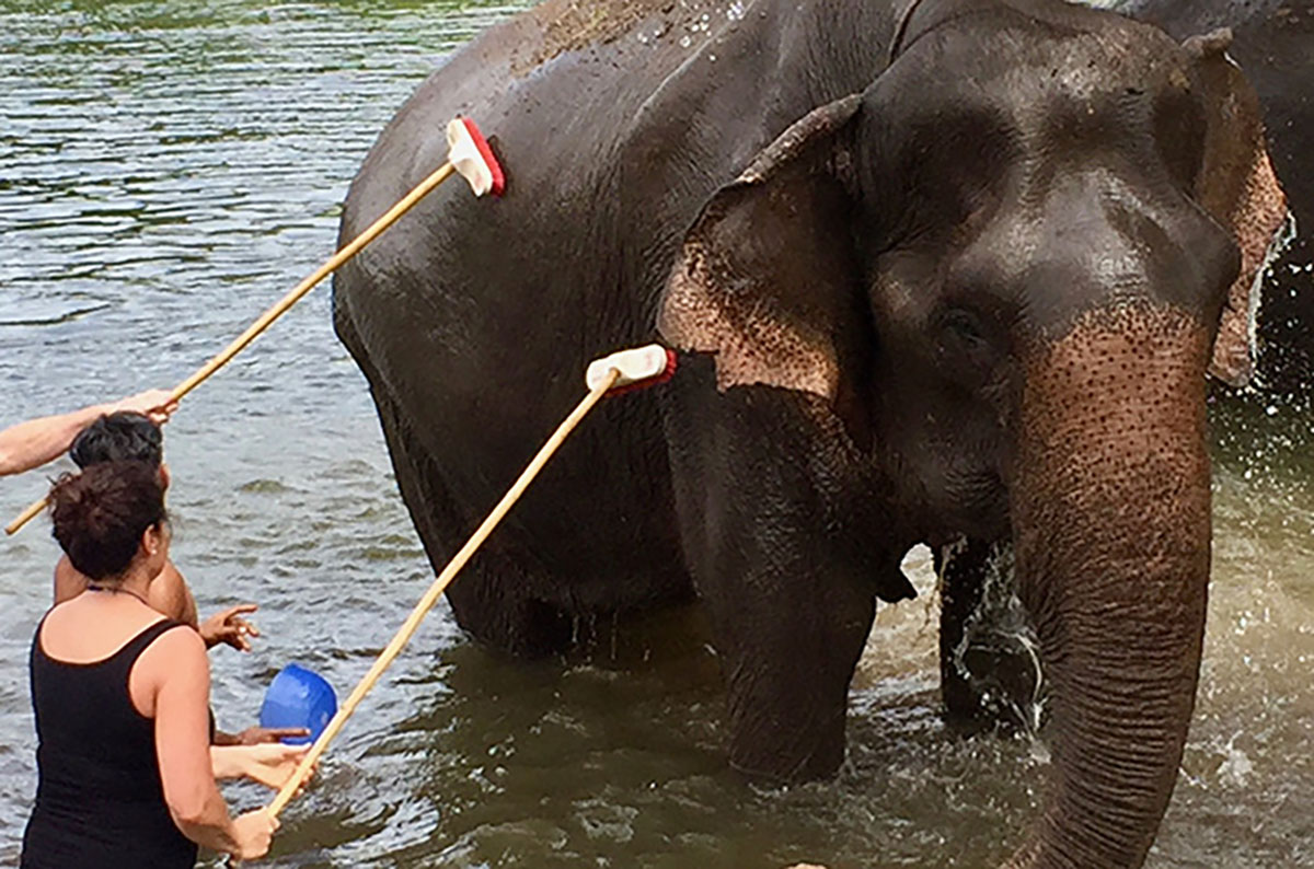 Kanchanaburi Elephants World
