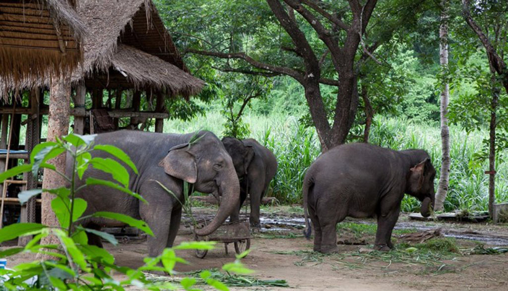Lampang-Thai-Elephant-Conservation-Centre